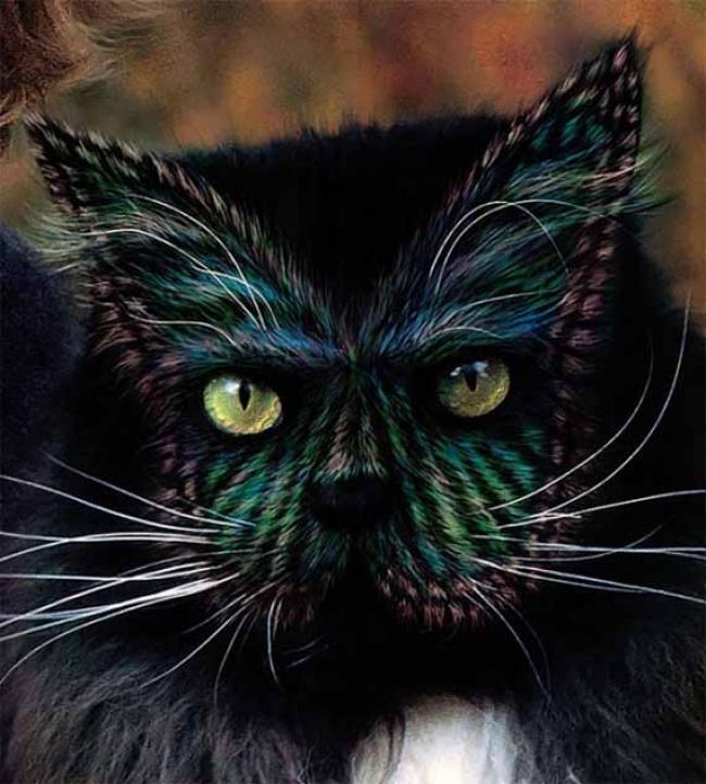gato-color-07