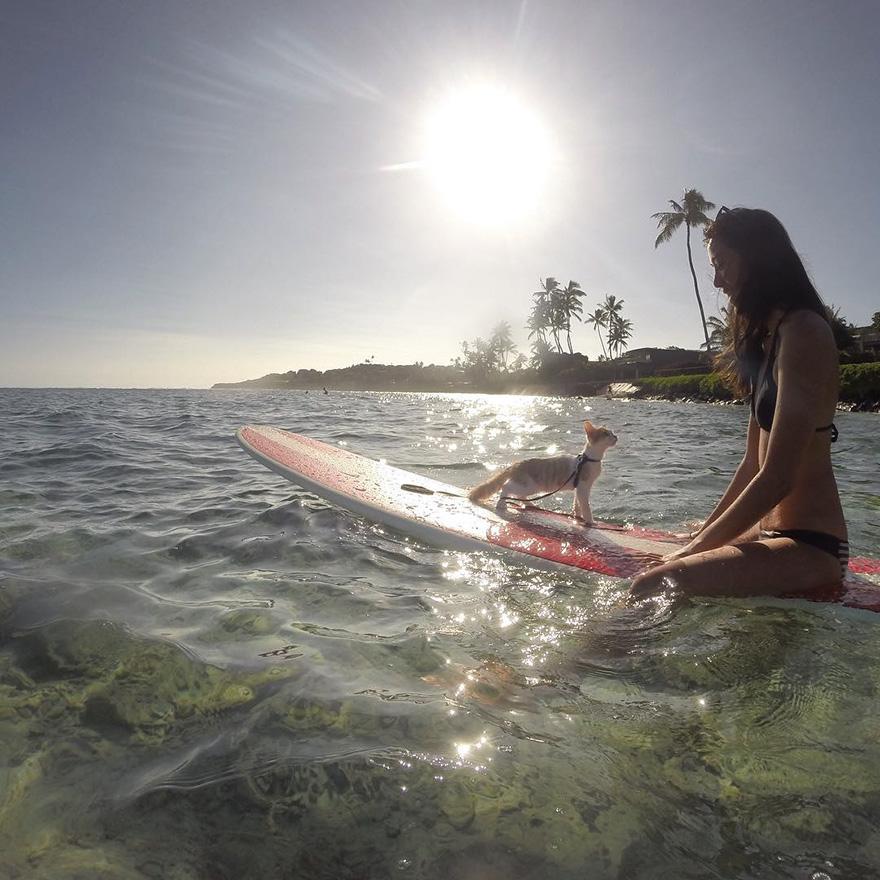 gato-con-un-solo-ojo-surfea-en-hawaii-2