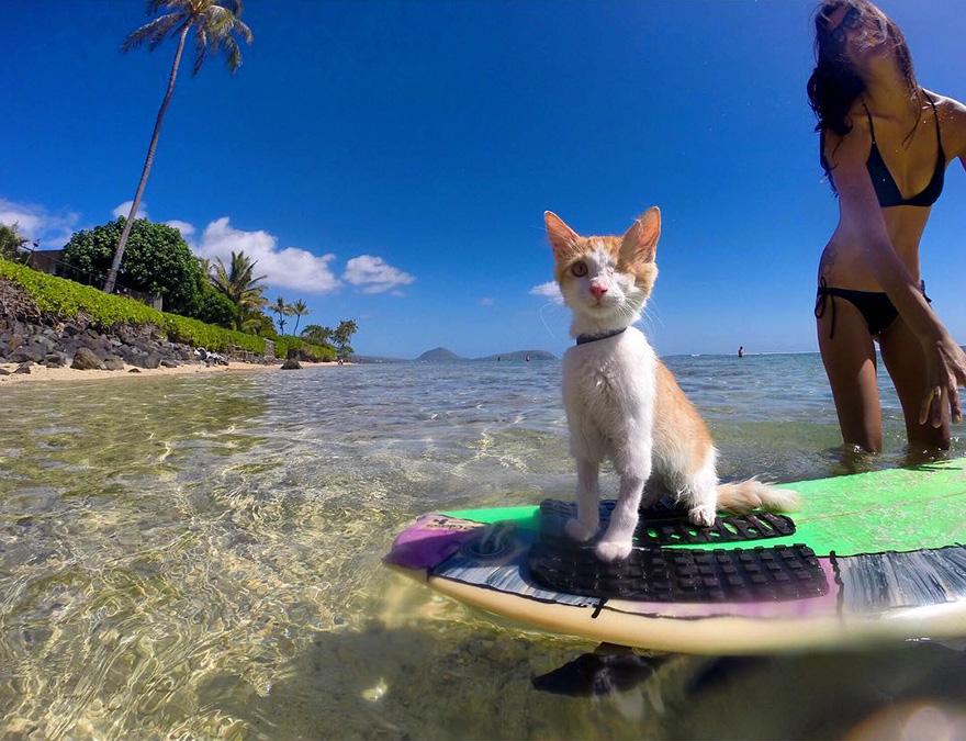 gato-con-un-solo-ojo-surfea-en-hawaii-8
