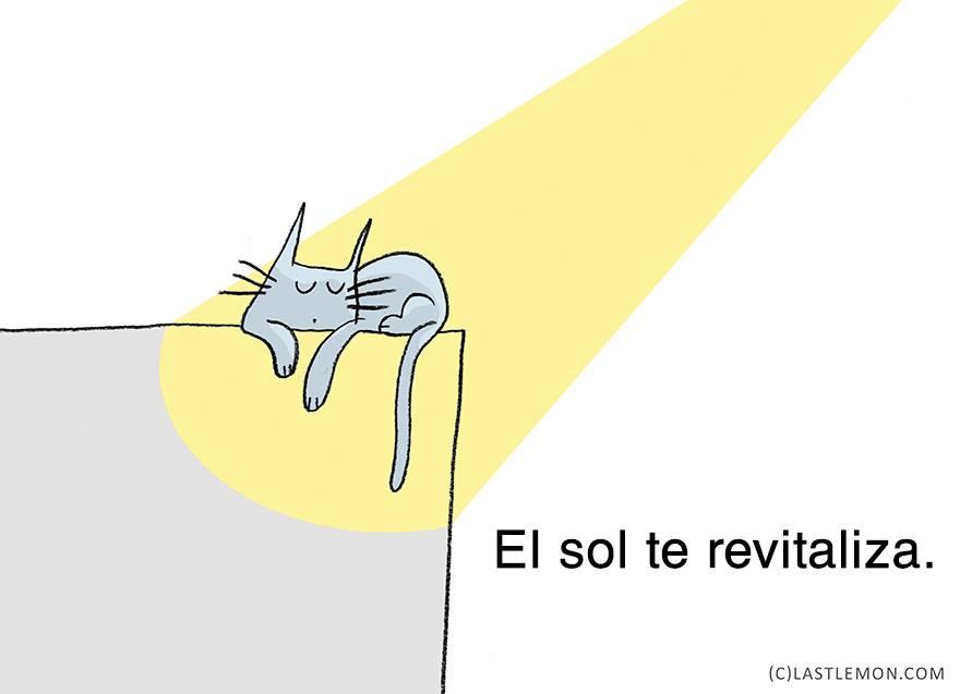 gato-relajado-04
