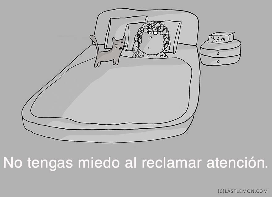 gato-relajado-08