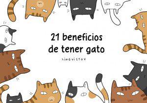 21 ventajas de tener gato