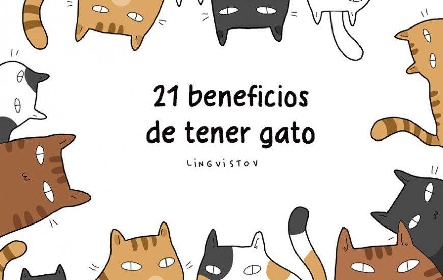 21 ventajas de tener un gato