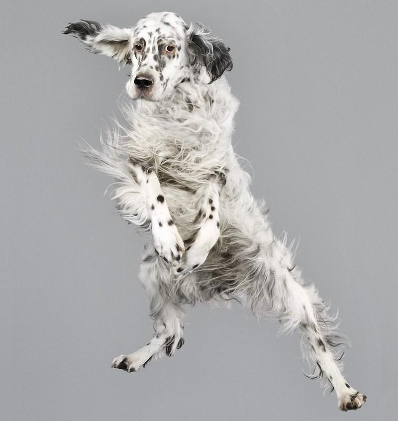 perros-volando-03