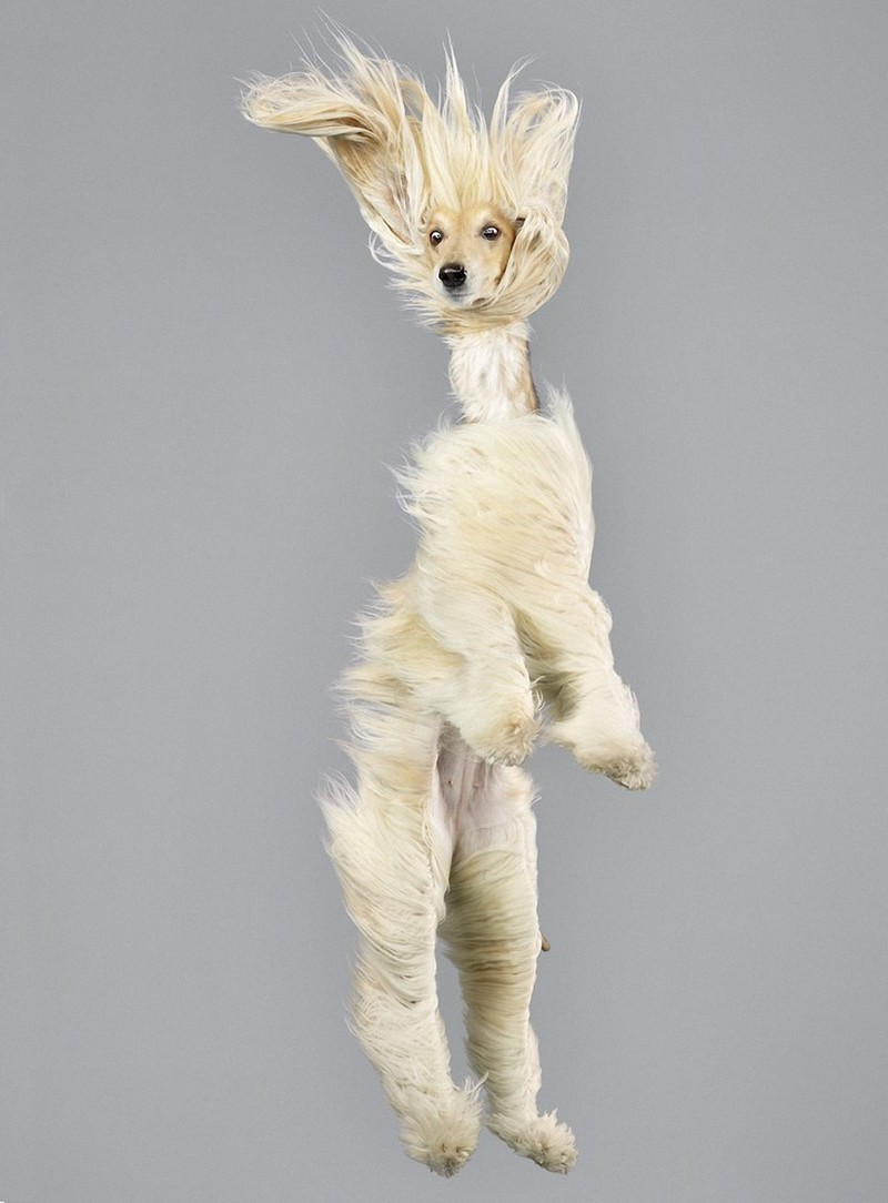 perros-volando-10
