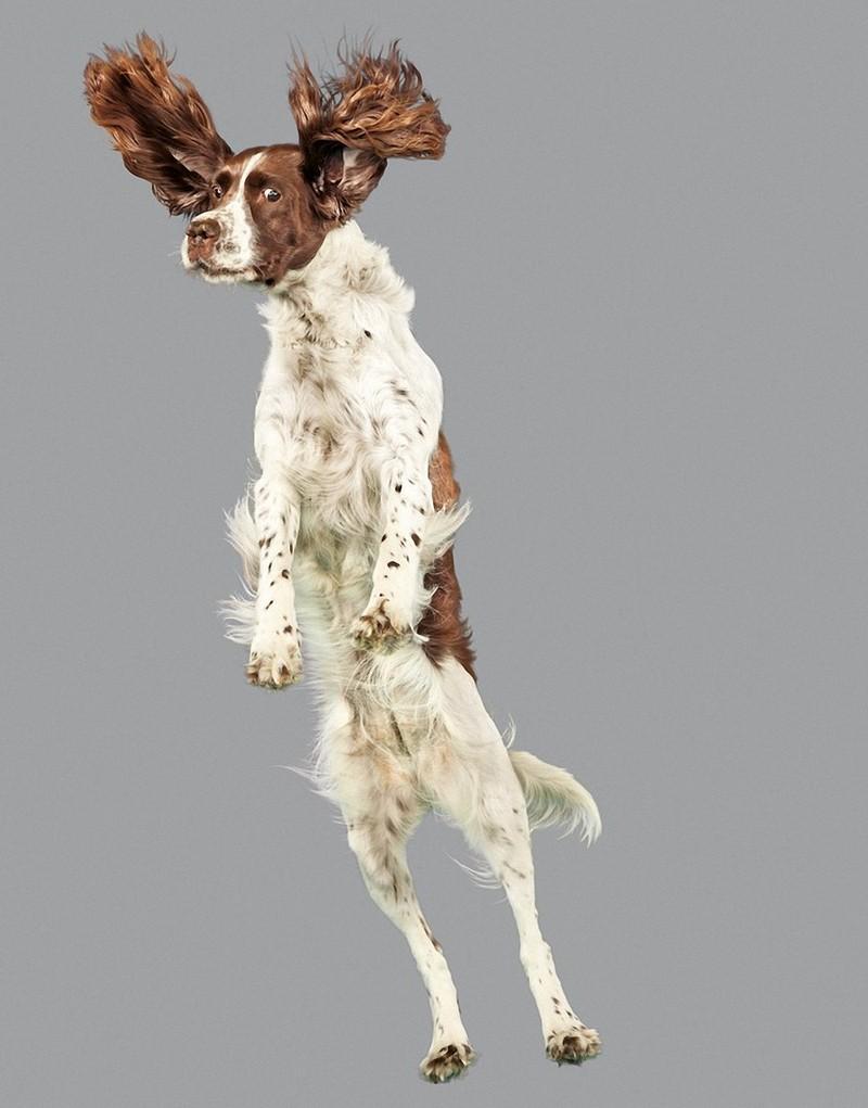 perros-volando-12