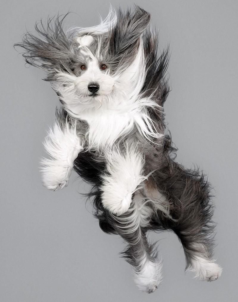 perros-volando-16