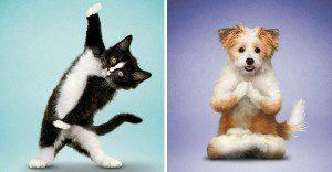 Nada más tierno y motivador que estos gatos y perros haciendo Yoga