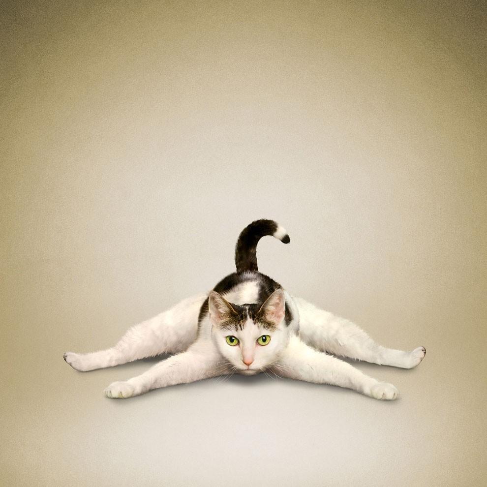 Nada más tierno y motivador que estos gatos y perros haciendo Yoga 002