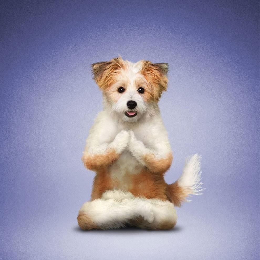 Nada más tierno y motivador que estos gatos y perros haciendo Yoga 004