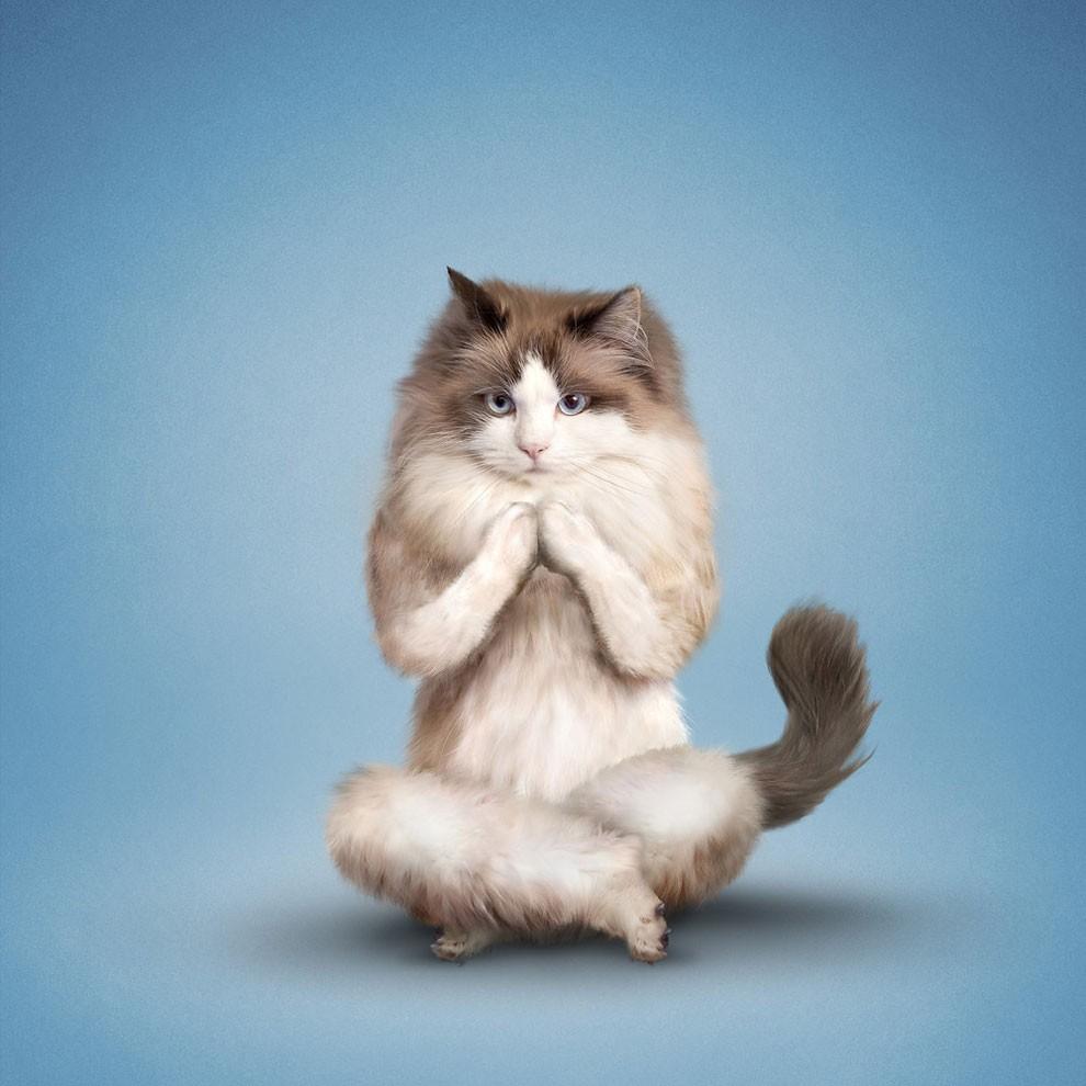 Nada más tierno y motivador que estos gatos y perros haciendo Yoga 005
