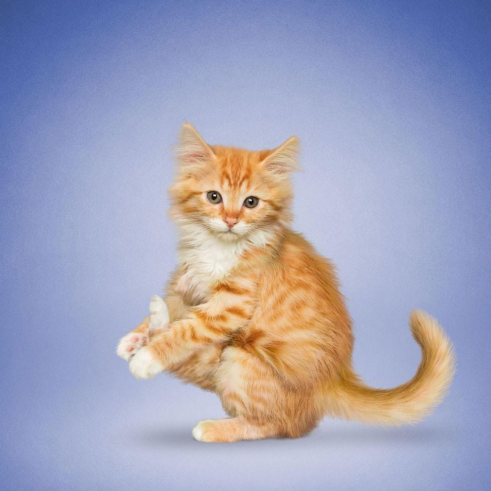 Nada más tierno y motivador que estos gatos y perros haciendo Yoga 010
