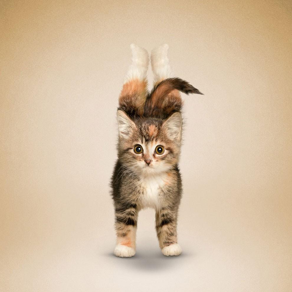 Nada más tierno y motivador que estos gatos y perros haciendo Yoga 012