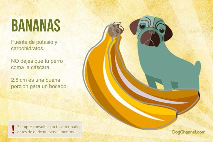 Qué frutas puedo darle de comer a mi perro bananas