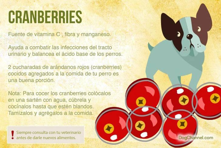 Qué frutas puedo darle de comer a mi perro cramberries