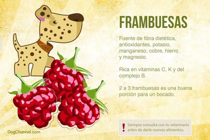 Qué frutas puedo darle de comer a mi perro frambuesas