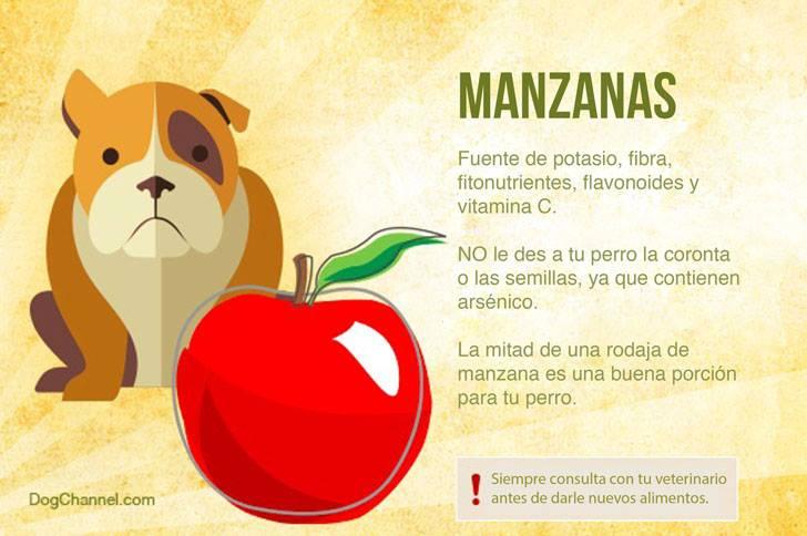 Qué frutas puedo darle de comer a mi perro manzana