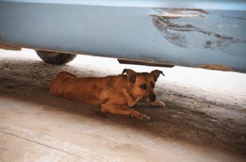 perro-playa-asustado-04