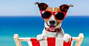 6 consejos para el cuidado de tu perro cuando lo lleves a la playa