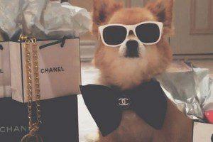 Conoce a las mascotas más ricas del mundo