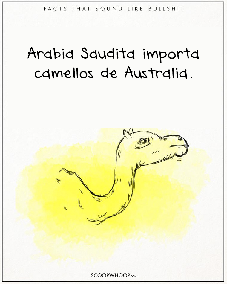 24 hechos totalmente absurdos que son totalmente ciertos camello