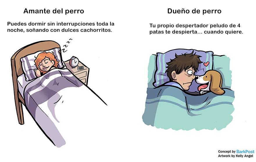 Divertidas diferencias entre ser amante de los perros y ser dueño de uno cama