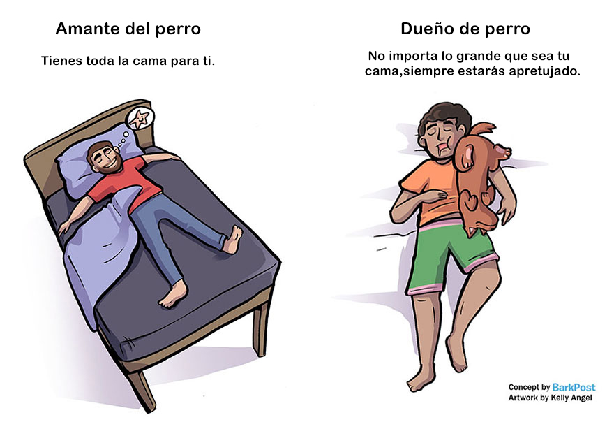 Divertidas diferencias entre ser amante de los perros y ser dueño de uno durmiendo