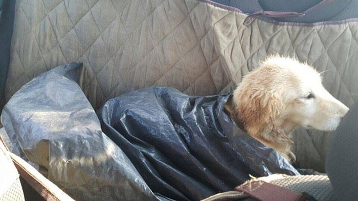 Esta perrita perdió sus 4 patas en un matadero en Corea del Sur. El motivo los destrozará 01