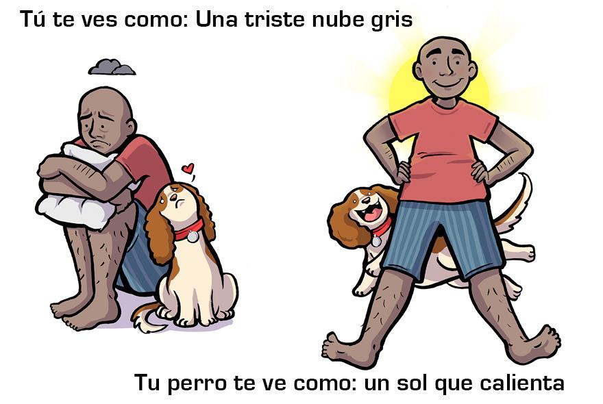 La manera cómo los perros ven a sus dueños 09