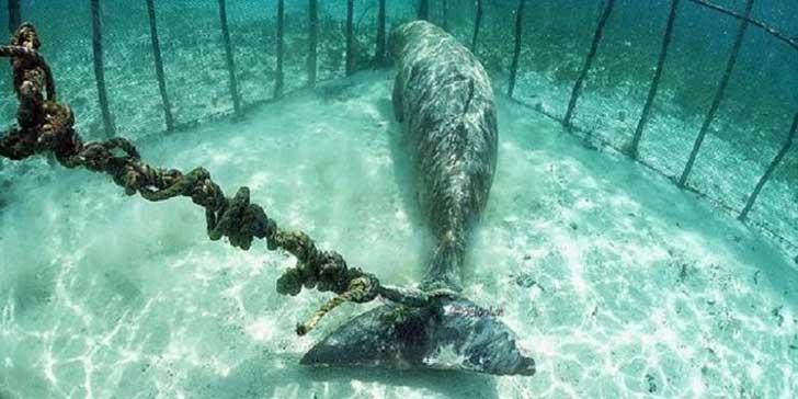 Lo que encontraron estos buzos debajo del mar es una crueldad hacia la vida animal 01