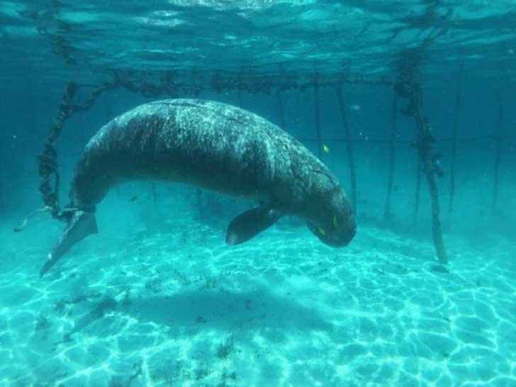 Lo que encontraron estos buzos debajo del mar es una crueldad hacia la vida animal 02