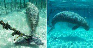 Lo que encontraron estos buzos debajo del mar es una crueldad hacia la vida animal
