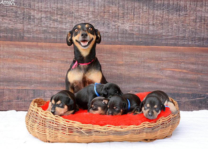 Recuerdan a la perrita que posaba preñada Enhorabuena Ya es madre 01