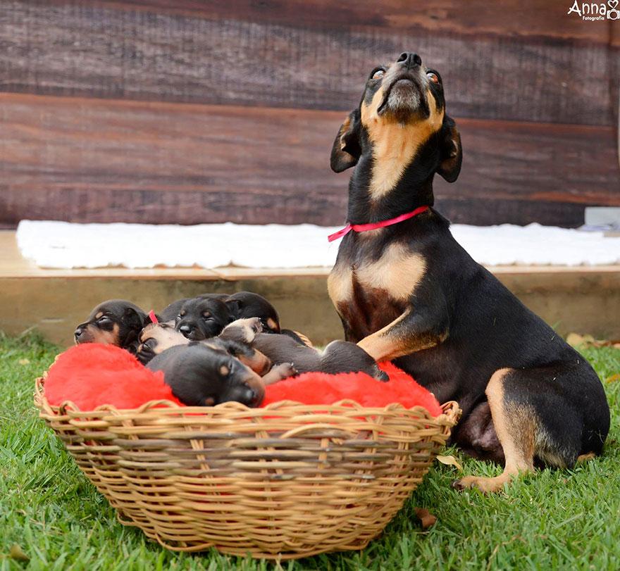 Recuerdan a la perrita que posaba preñada Enhorabuena Ya es madre 04