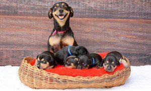 ¿Recuerdan a la perrita que posaba preñada? ¡Enhorabuena! Ya es madre
