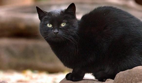 Conoce a las mascotas más ricas del mundo blackie