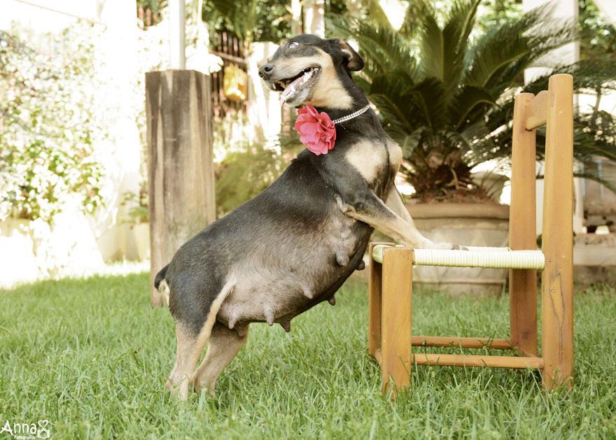 fotos-embarazo-perro-lilica-ana-paula-grillo-3