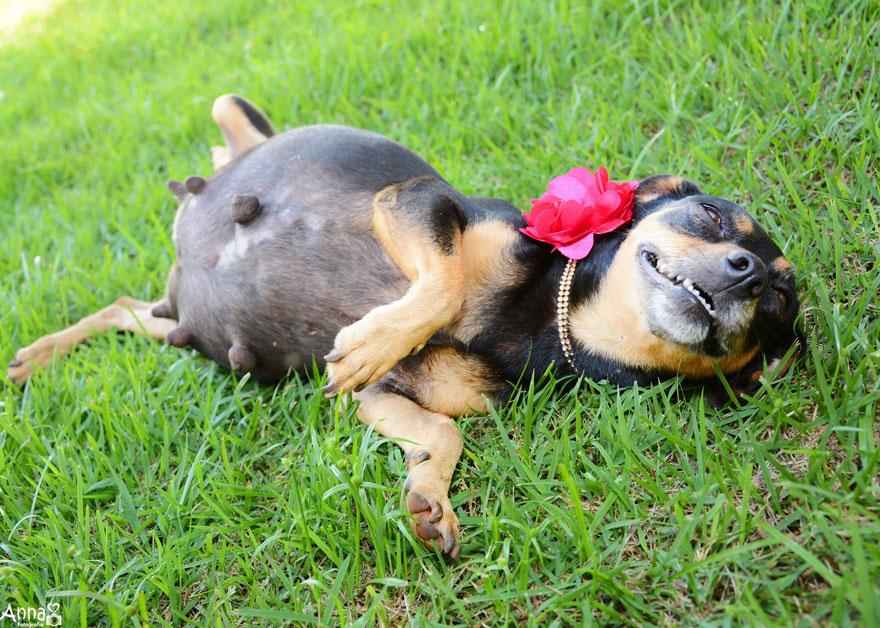 fotos-embarazo-perro-lilica-ana-paula-grillo-4