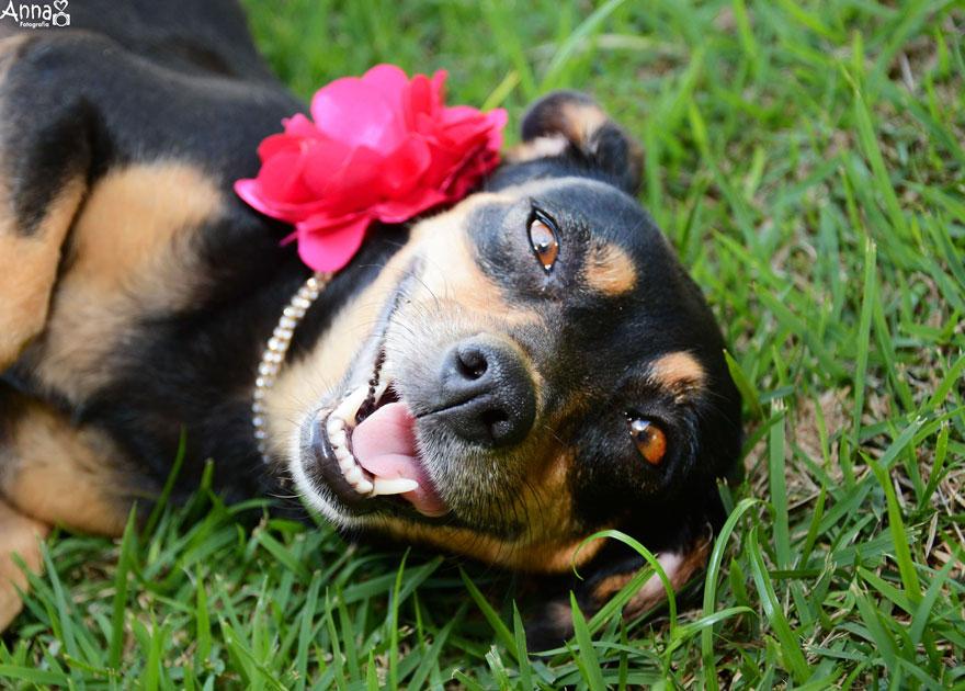 fotos-embarazo-perro-lilica-ana-paula-grillo-5