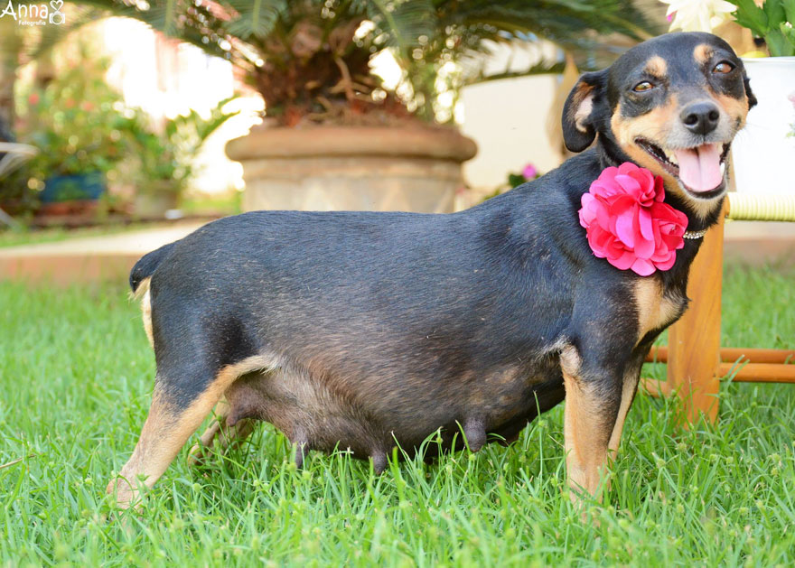 fotos-embarazo-perro-lilica-ana-paula-grillo-6