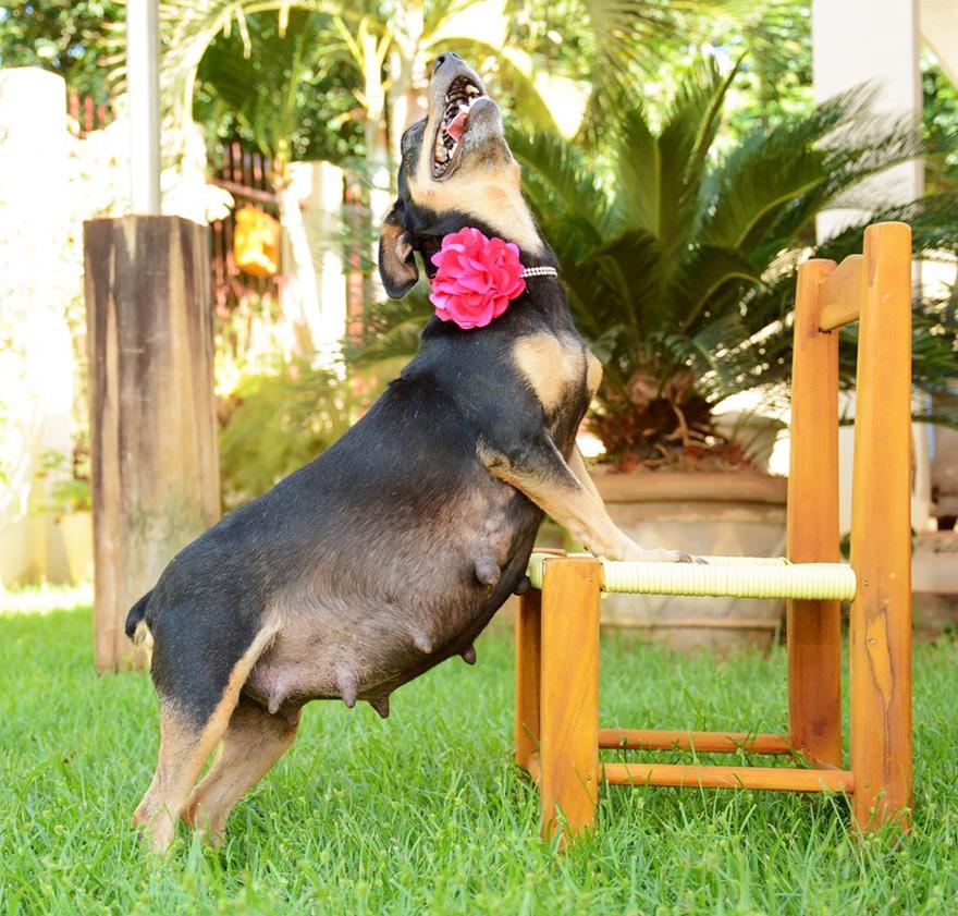 fotos-embarazo-perro-lilica-ana-paula-grillo-8