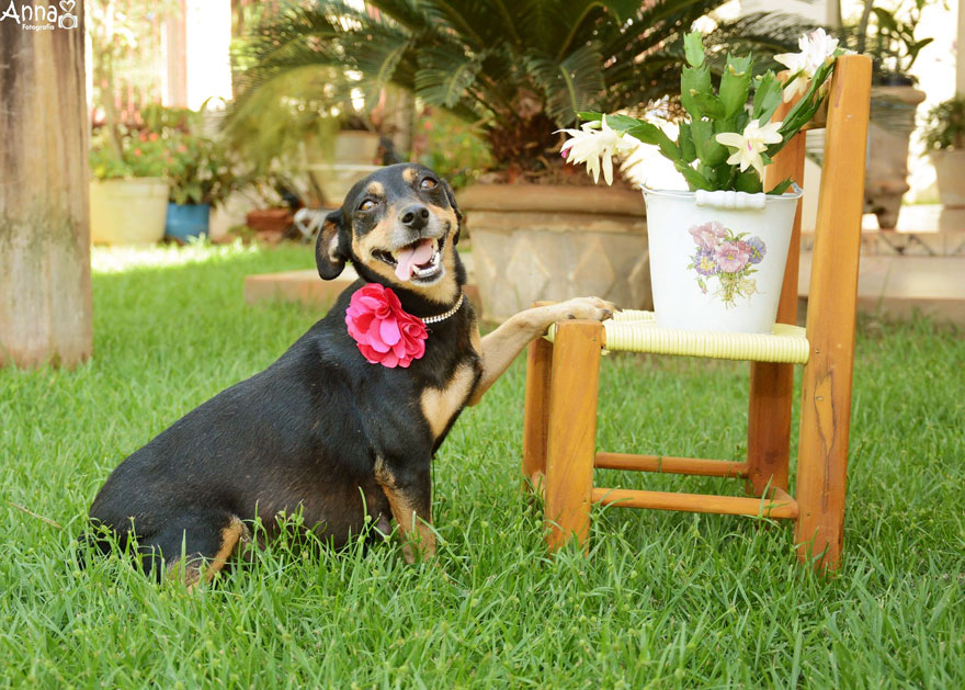 fotos-embarazo-perro-lilica-ana-paula-grillo-9