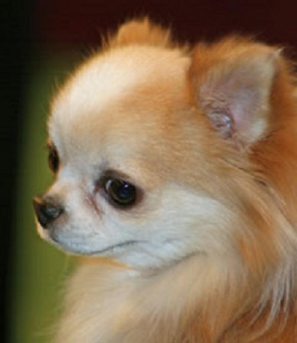 Conoce a las mascotas más ricas del mundo frankie-ani-pepe