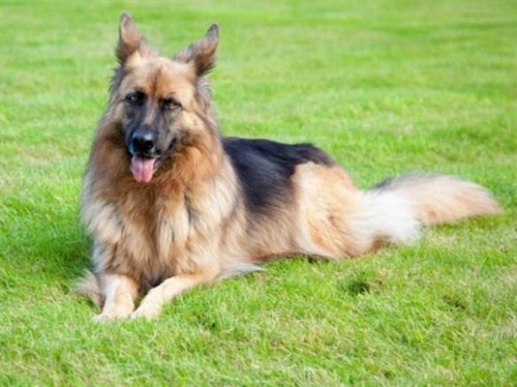 Conoce a las mascotas más ricas del mundo gunther-iv