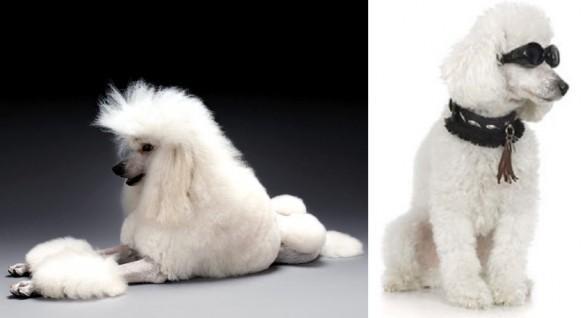 Conoce a las mascotas más ricas del mundo toby-rimes