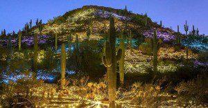Bellos paisajes de luz por el artista Bruce Munro