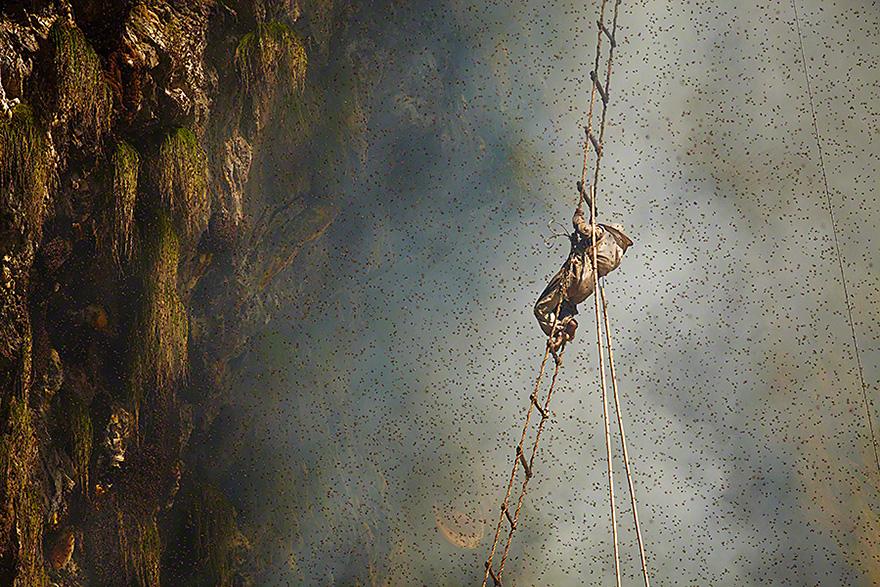 Cazadores de miel de los acantilados del Himalaya3