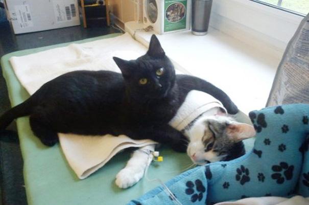 El curioso caso del gato enfermero de Polonia