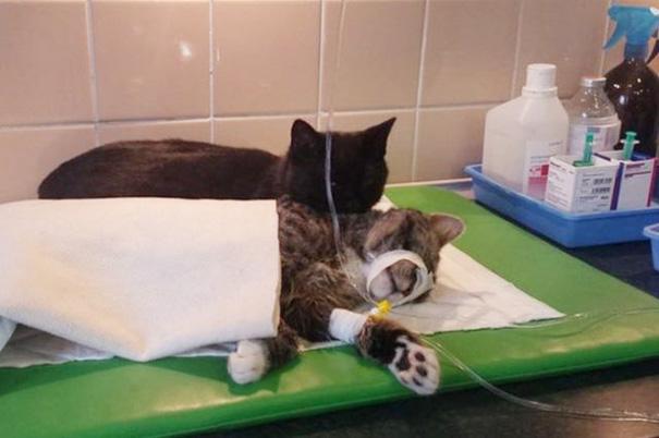 El curioso caso del gato enfermero de Polonia 02