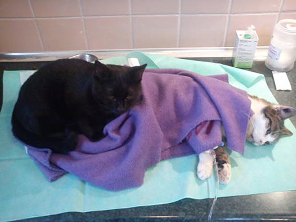 El curioso caso del gato enfermero de Polonia 03